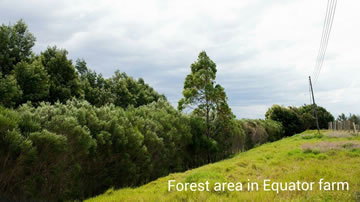 Forest Area in Equator Farm